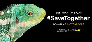 Image of: Nat Geo And Stills Of Animals From The Photo Ark Spanning The Citys Digital Amphitheater Before Disappearing In Symbolic Execution Underlying The Importance National Geographic National Geographic And Ooh Trade Body Launch Endangered Species