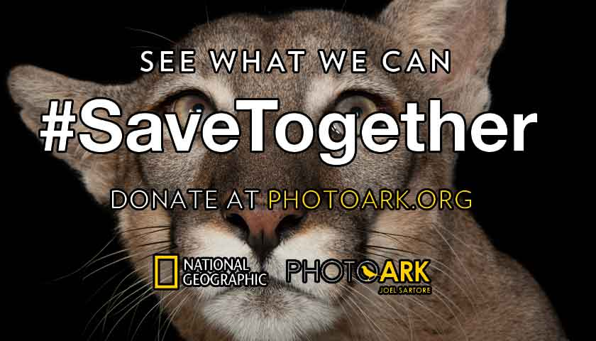 Image of: Critically Endangered National Geographic And Oaaa Launch Endangered Species Campaign Ethical Marketing News National Geographic And Ooh Trade Body Launch Endangered Species